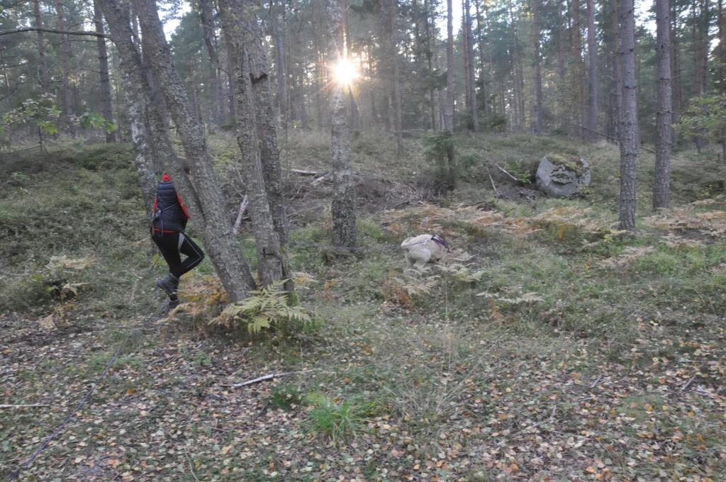 Kursen: Skogsarbete