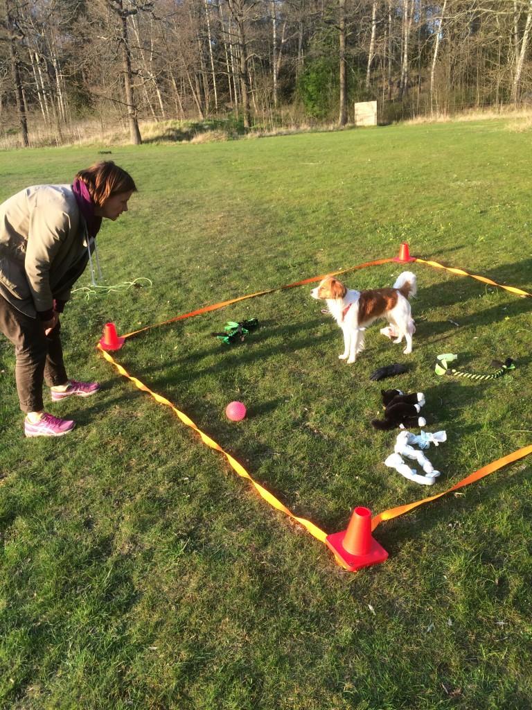 Avslut på unghundskursen: Hur många föremål kan din hund apportera ut ur en ruta på 90 sekunder?